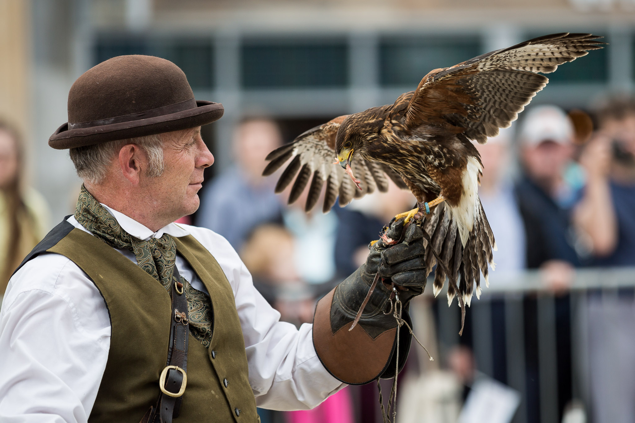 Falconry Display Peterborough