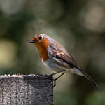 Bird & Wildlife Photography Course